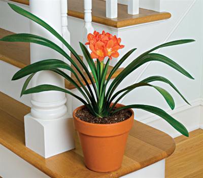Alegra Tu Hogar Con Plantas De Interior Mujeres Blog De Belleza - Plantas-interior-con-flor