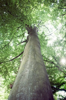 Lo que siente un árbol 3