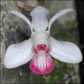 Las orquídeas 3