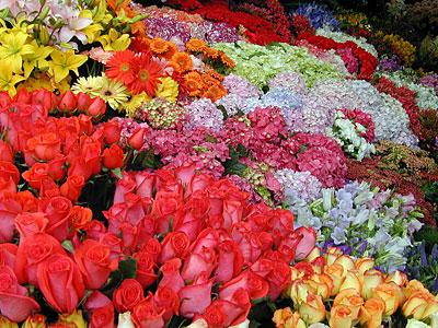 Flores en la belleza 3
