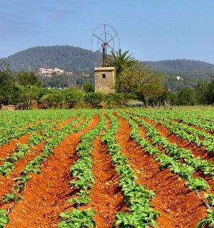 Qué son los cultivos ecológicos 3