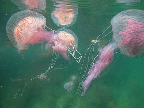 El ataque de las medusas I 3