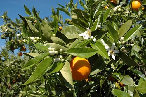 Consumir frutas ecológicas 3