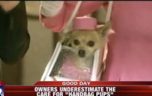 Angustioso abandono de perros por moda 1